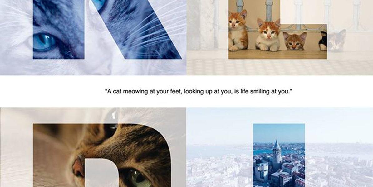 Kedi – Dec. 18