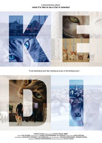 Kedi – Dec. 18th