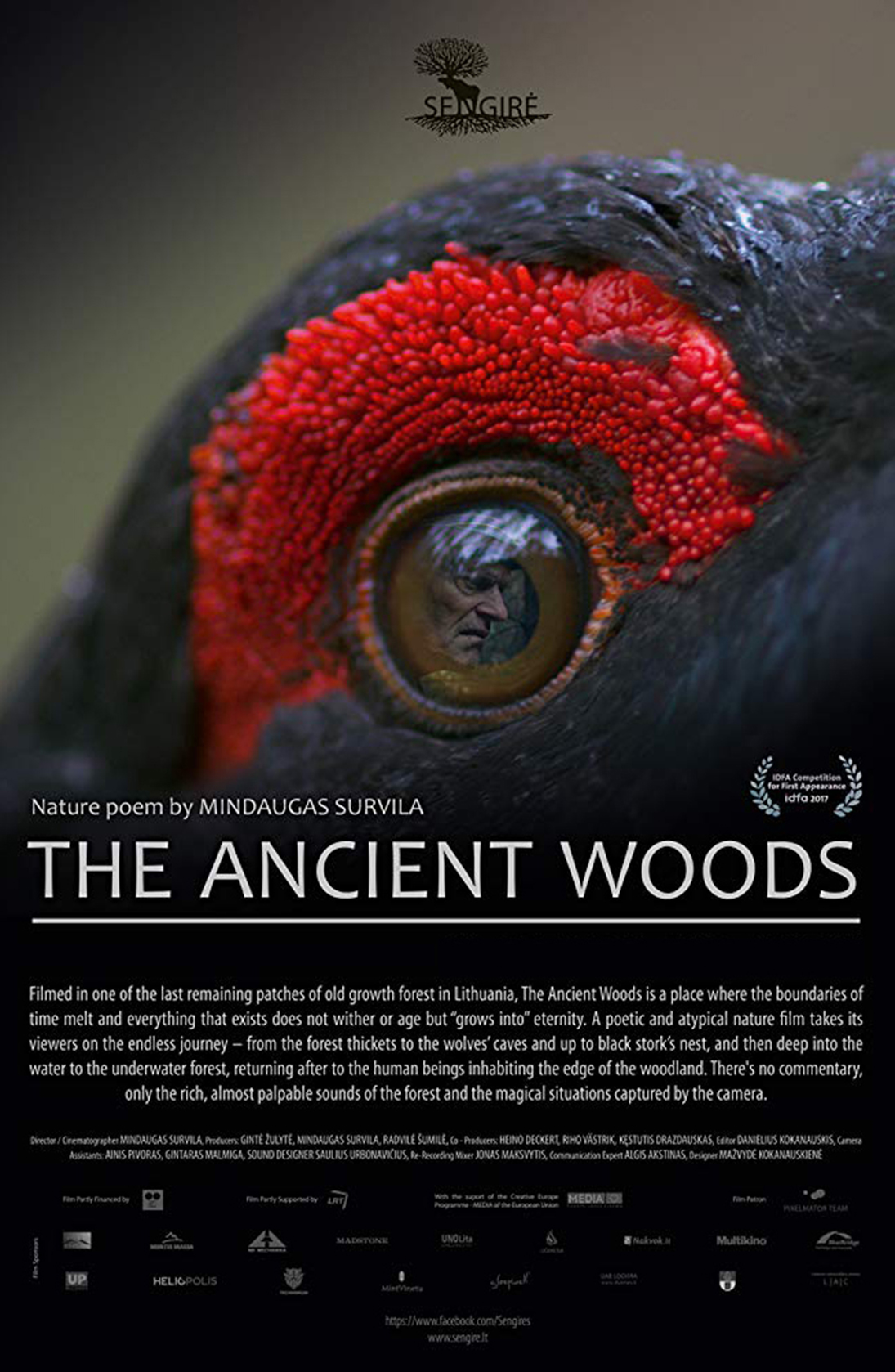 The Ancient Woods – Feb. 17th